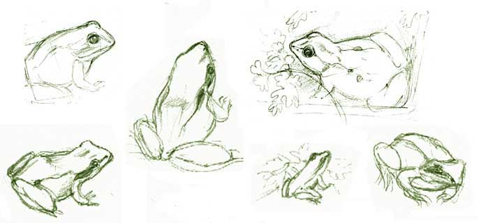 Sketches of frogs