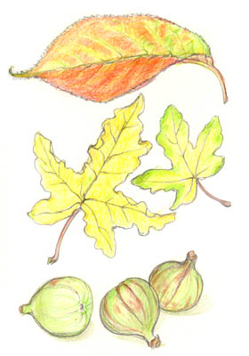 Autumn leaves and figs