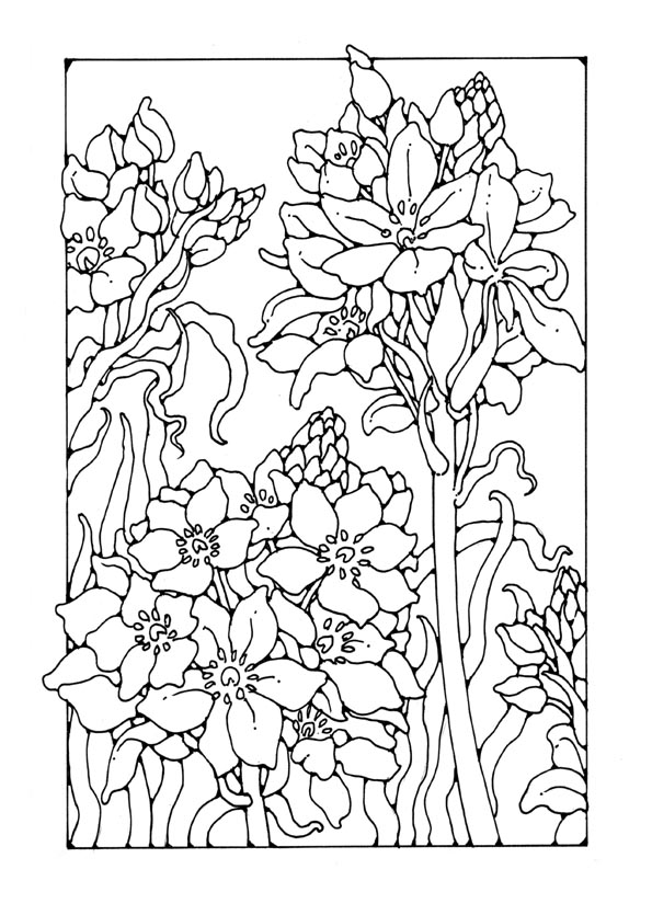 1000 images about advanced coloring flowers on pinterest dover publications fairy coloring